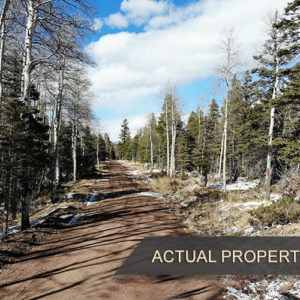 Your Perfect Mountain Community! - 1.28 Acres in Fort Garland, CO